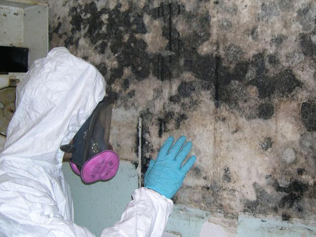 Mold Remediation Services Ottawa