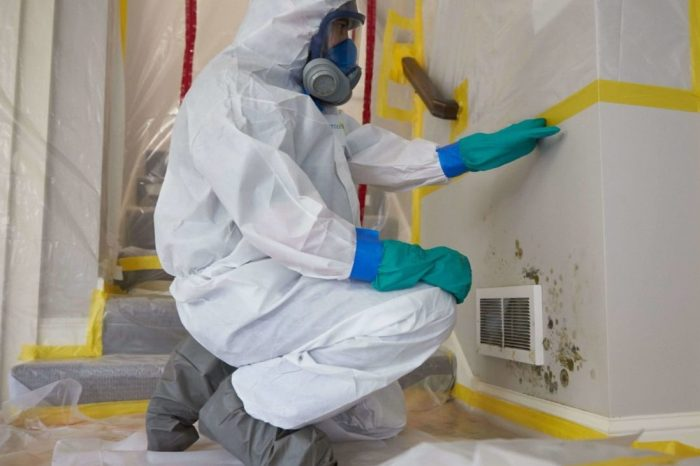 Mold Removal Ottawa